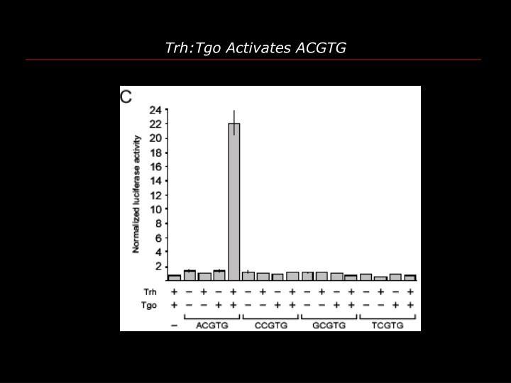 Trh:Tgo Activates ACGTG