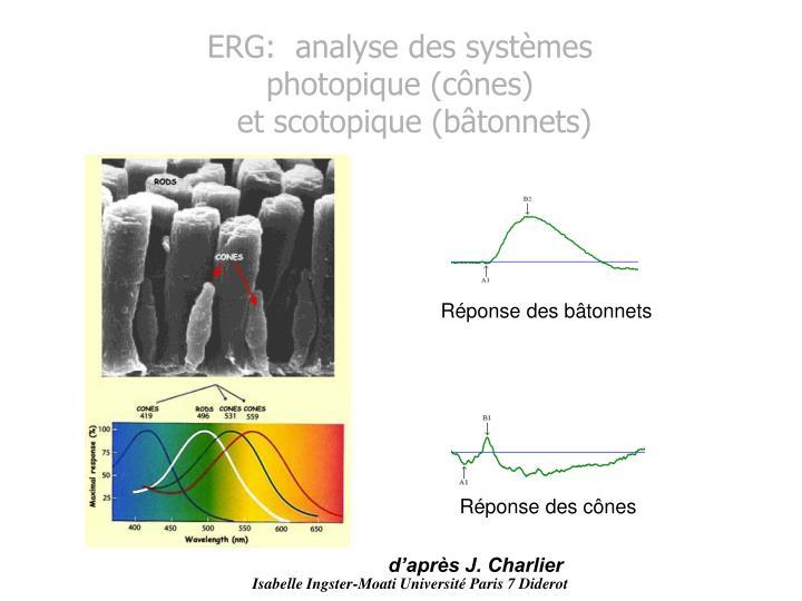 ERG:  analyse des systèmes photopique (cônes)