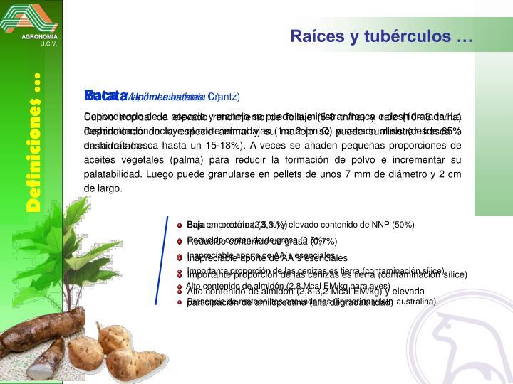 Raíces y tubérculos …