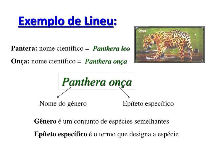 Exemplo de Lineu