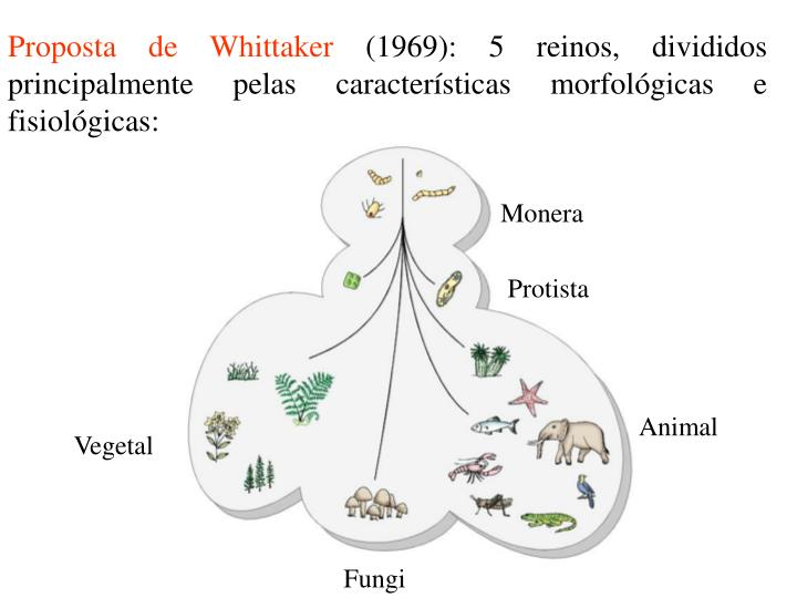 Proposta de Whittaker