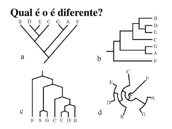 Qual é o é diferente?
