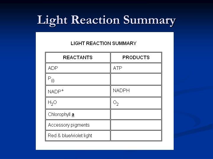 Light Reaction Summary