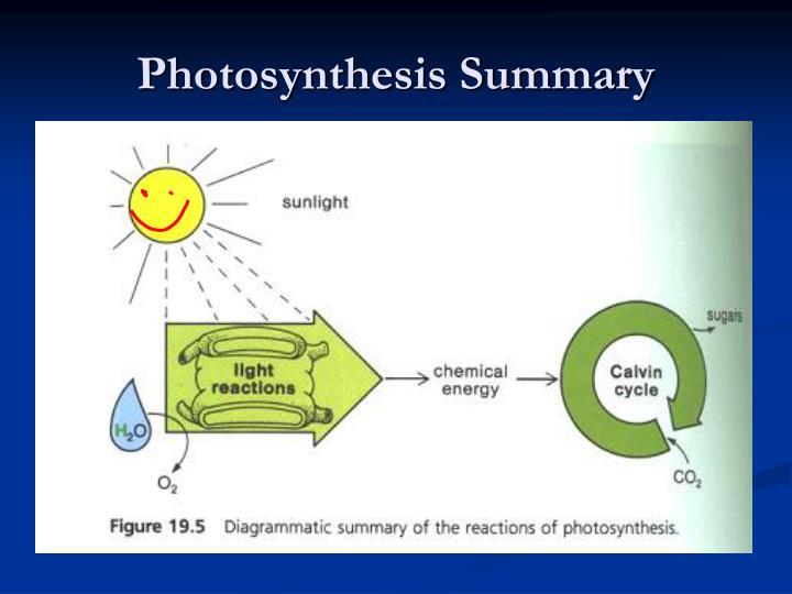 Photosynthesis Summary