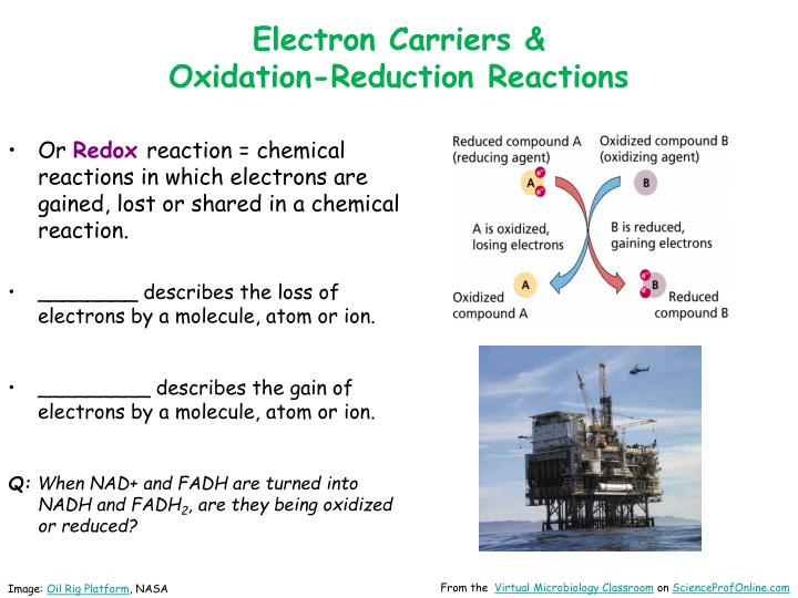 Electron Carriers &