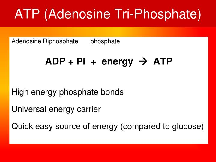 ATP (Adenosine Tri-Phosphate)