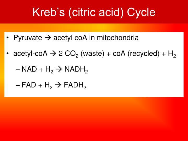 Kreb's (citric acid) Cycle