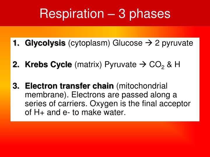 Respiration – 3 phases