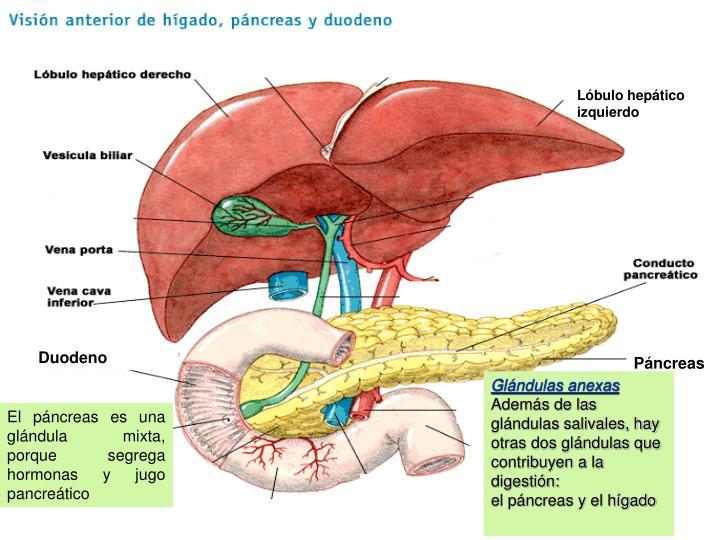 Lóbulo hepático izquierdo
