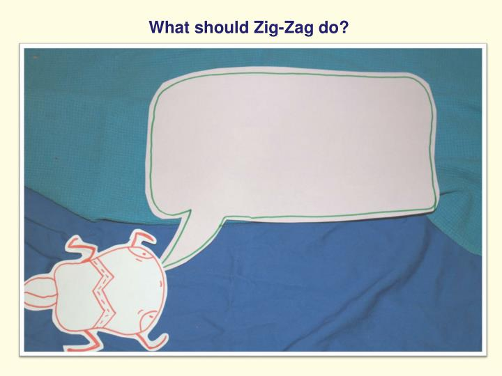 What should Zig-Zag do?