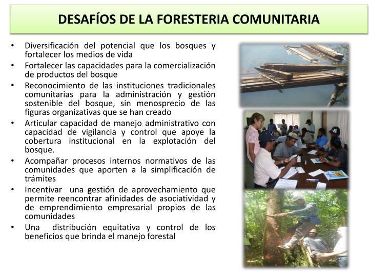 DESAFÍOS DE LA FORESTERIA COMUNITARIA
