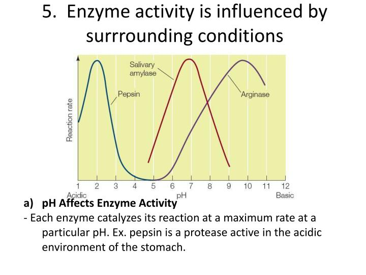 5.  Enzyme activity is influenced by