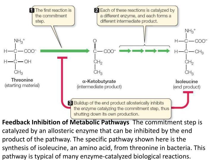 Feedback Inhibition of Metabolic Pathways