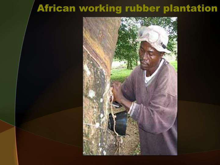 African working rubber plantation