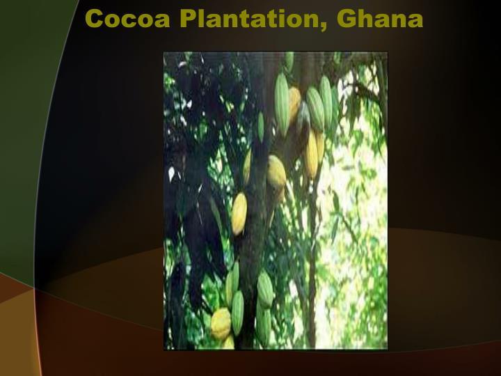 Cocoa Plantation, Ghana