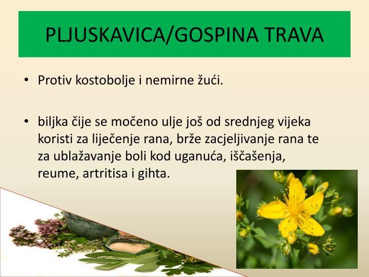 PLJUSKAVICA/GOSPINA TRAVA