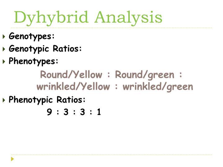 Dyhybrid