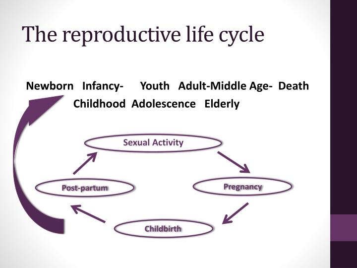 The reproductive