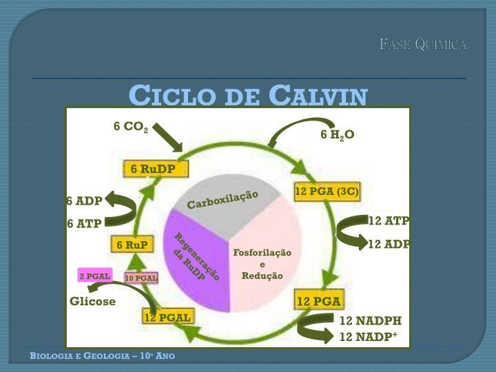 Fase Química