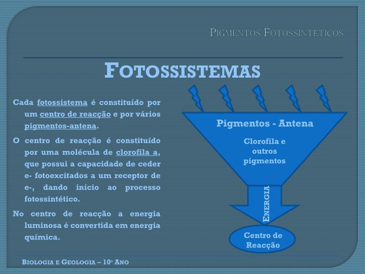 Pigmentos Fotossintéticos