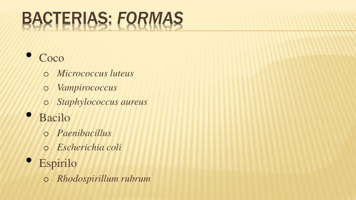 Bacterias: