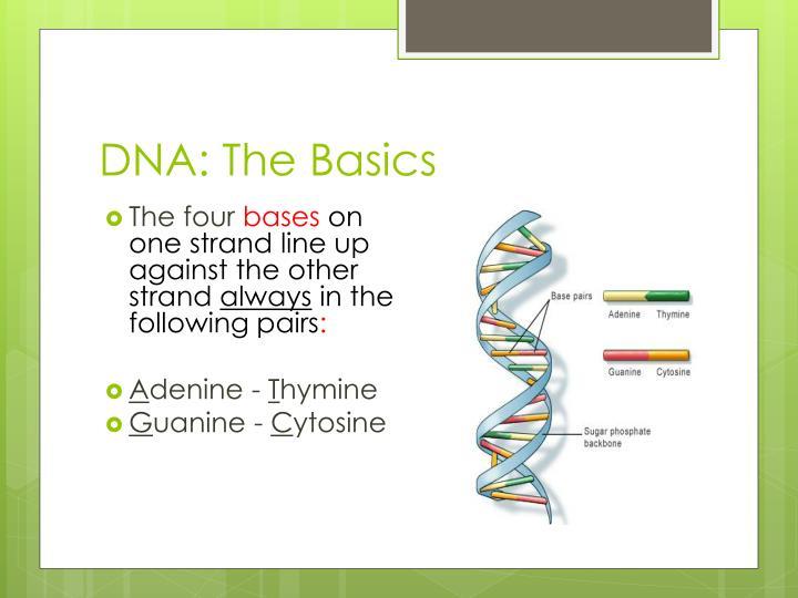 DNA: The Basics