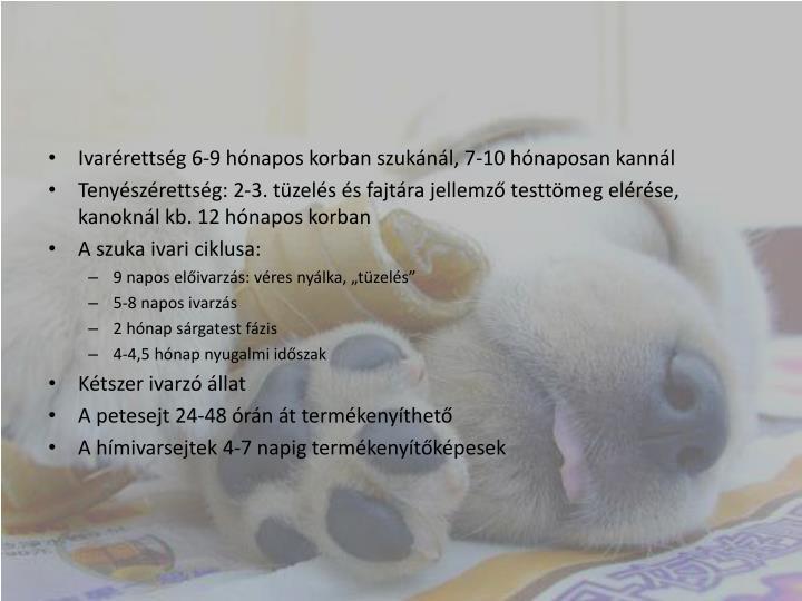 Ivarérettség 6-9 hónapos korban szukánál, 7-10 hónaposan kannál