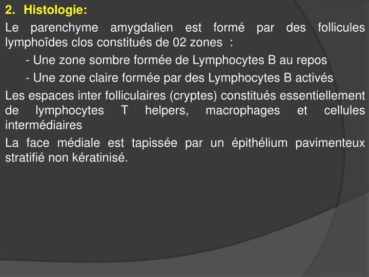 Histologie: