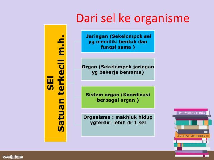 Dari sel ke organisme