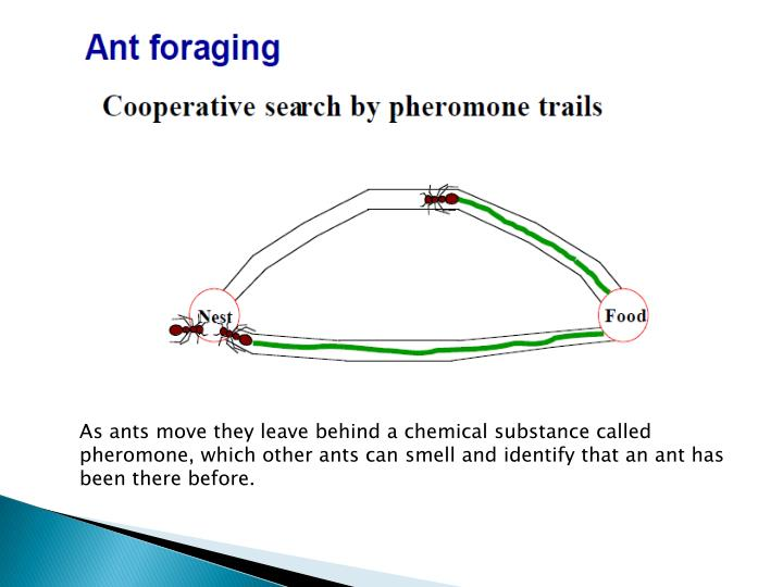 As ants move they leave behind a chemical substance called pheromone, which other ants can smell and identify that an ant has been there before.