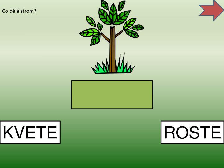 Co dělá strom?