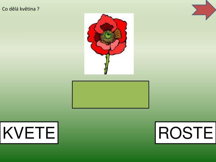Co dělá květina ?