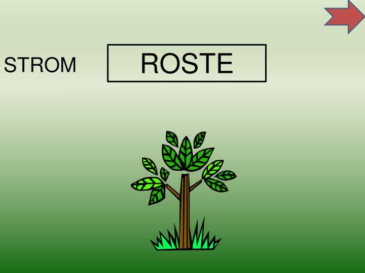 ROSTE