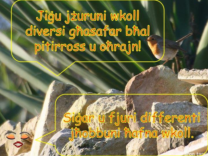Jiġu jżuruni wkoll diversi għasafar bħal pitirross u oħrajn!