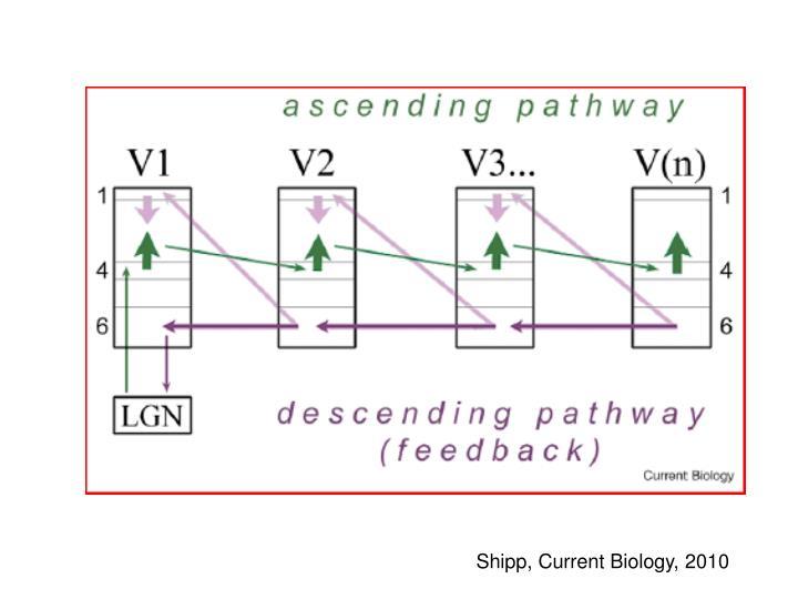 Shipp, Current Biology, 2010