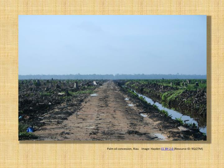Palm oil concession, Riau