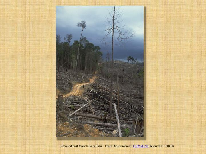 Deforestation & forest burning, Riau