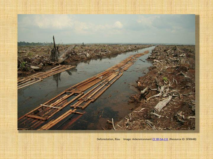 Deforestation, Riau