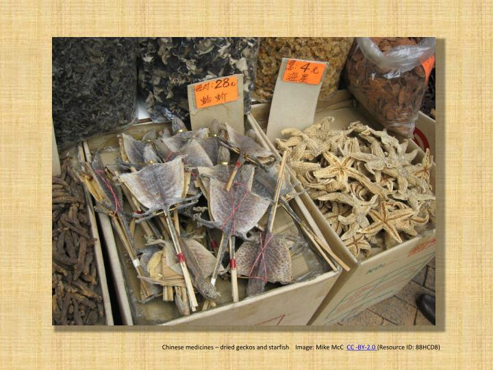 Chinese medicines – dried geckos and starfish