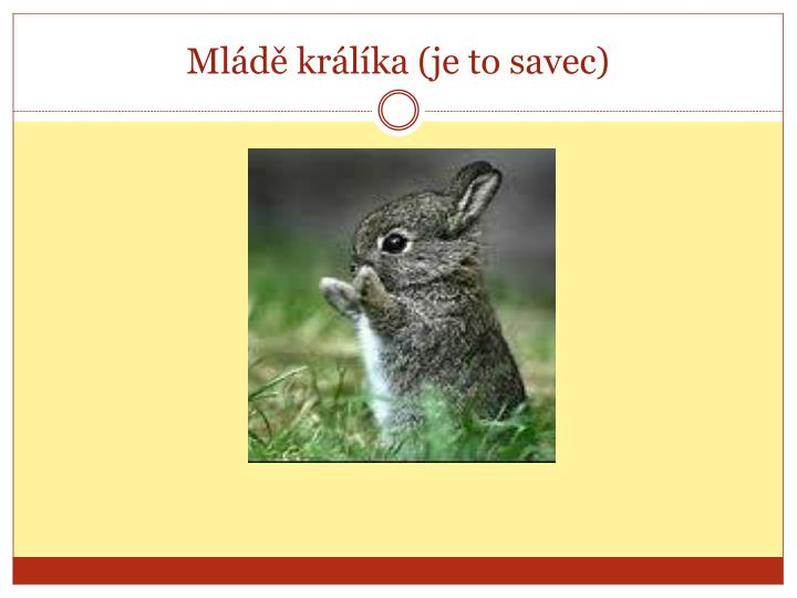 Ml d kr l ka je to savec