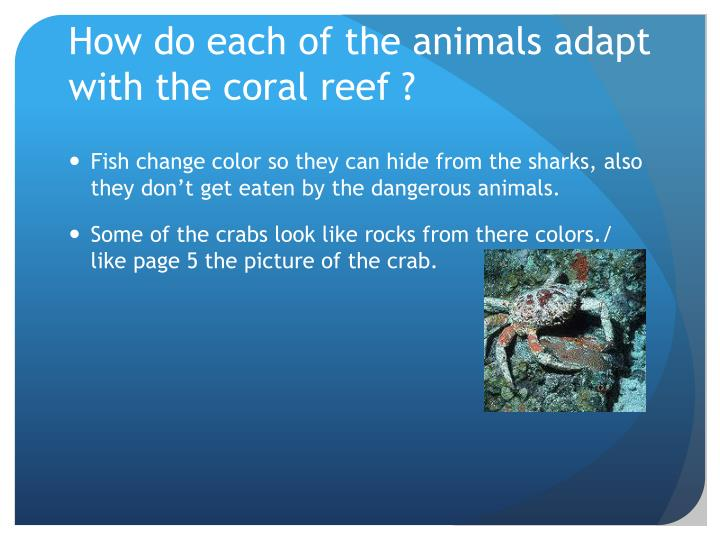 How do each of the animals adapt with the coral reef ?