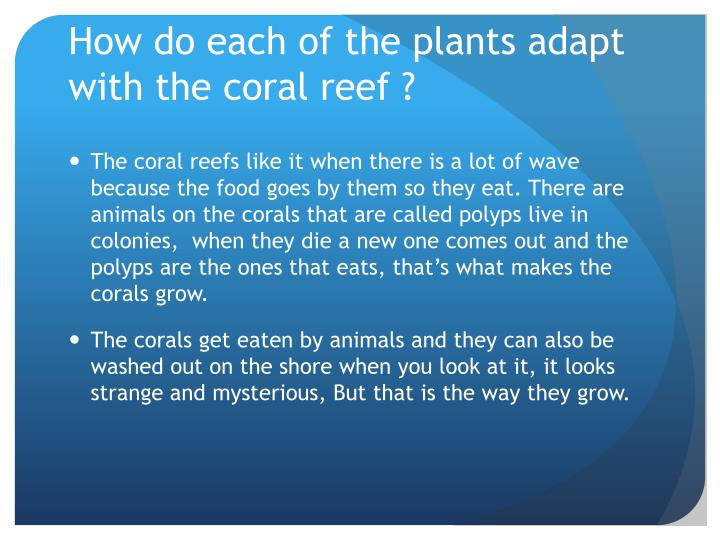 How do each of the plants adapt with the coral reef ?