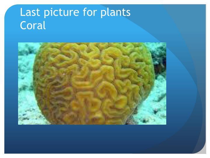 Last picture for plants