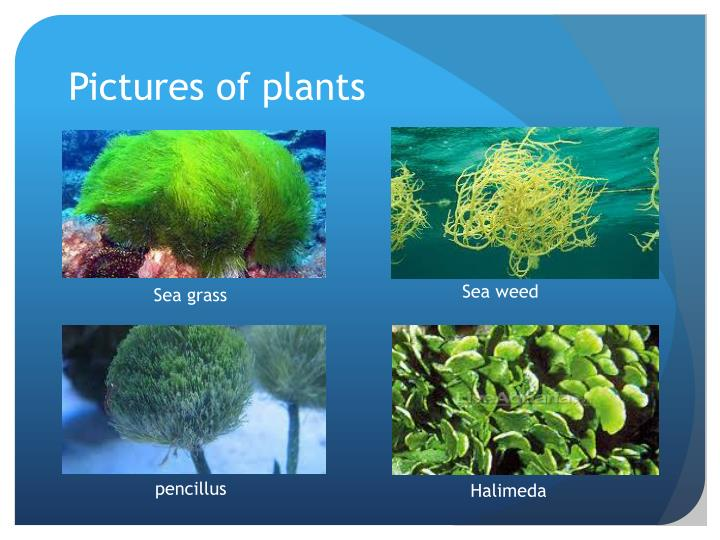 Pictures of plants