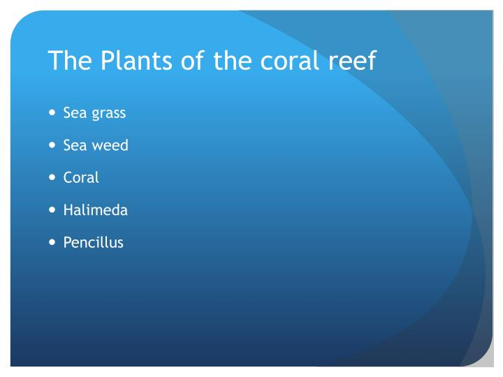 The Plants of the coral reef