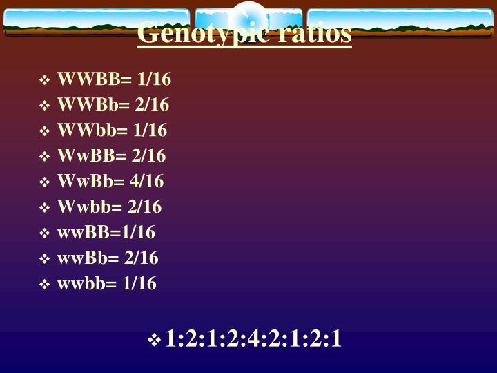 Genotypic ratios