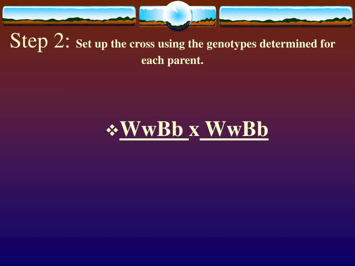 Step 2 set up the cross using the genotypes determined for each parent