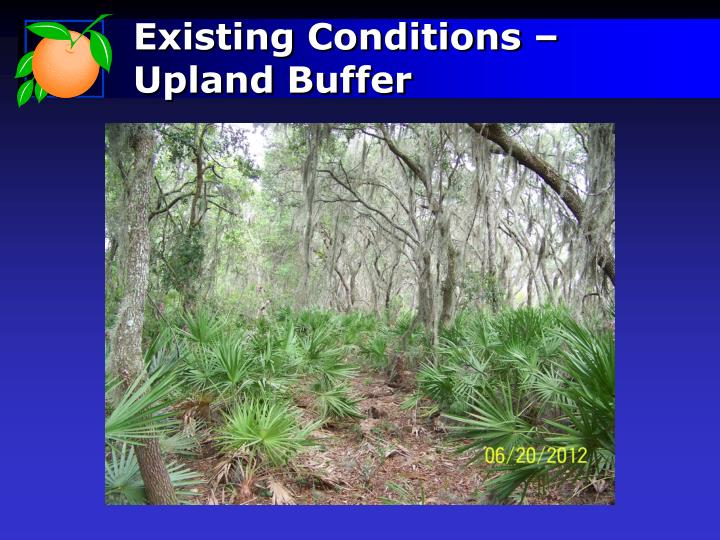 Existing Conditions – Upland Buffer