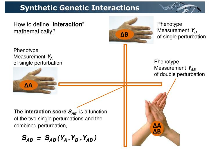 Synthetic Genetic Interactions