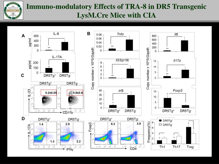 Immuno-modulatory Effects of TRA-8 in DR5 Transgenic LysM.Cre Mice with CIA